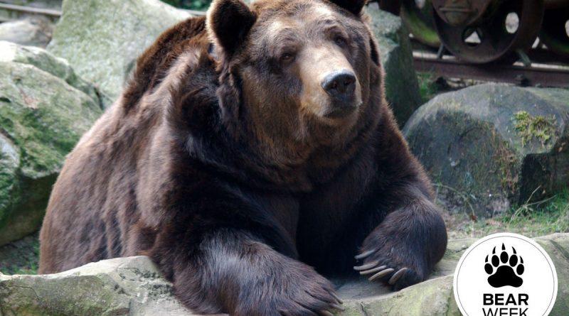 Ask a Bear: Do Bear Bells Really Work?