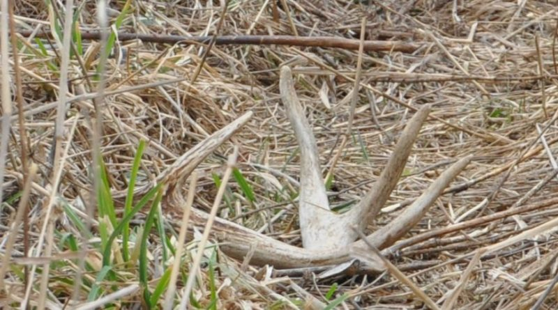 These 6 Shed Hunting Mistakes Might Explain Why You Never Find Anything