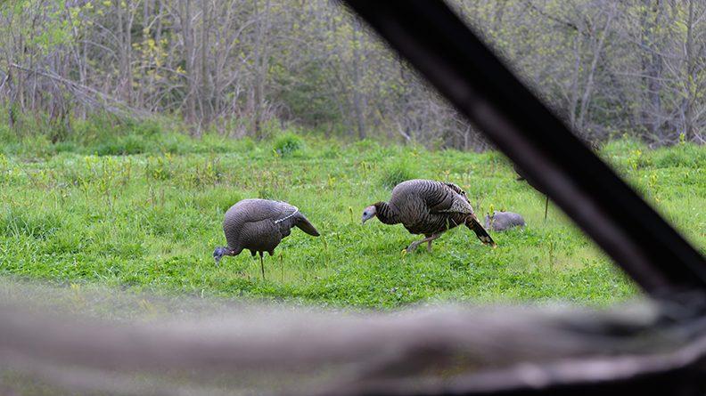 Quick ticket to more turkey kills: buy better decoys