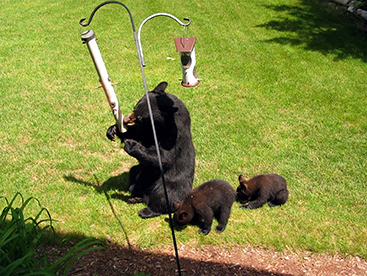 DNR: Take action now to reduce bear problems [video]