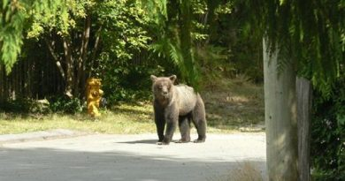 Shooting Wrong Bear Comes with a Price for British Columbia Bowhunter