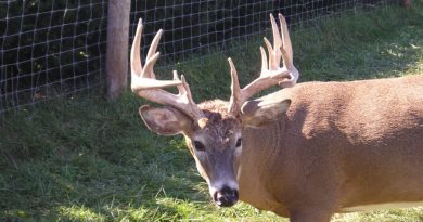 System Failure Could Have Big Implications for Minnesota CWD Case