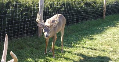 Michigan Game Ranch Owner Sentenced for Falsifying CWD Testing Info