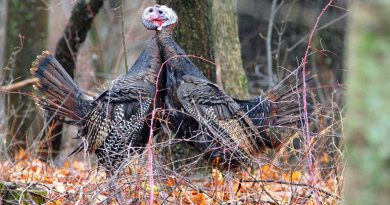 Portable blinds sometimes the best bet for turkey hunting in bad weather