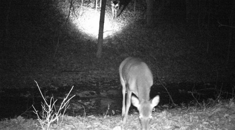 Trail Camera Captures Extremely Rare Moment