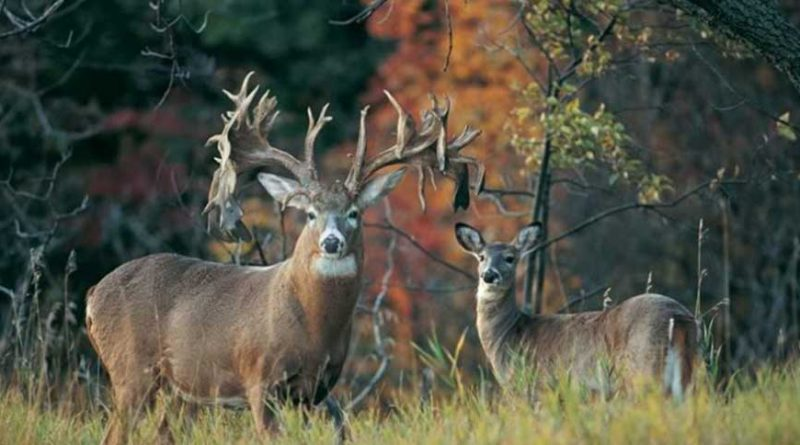 The 5 Biggest Whitetail Bucks Ever Found Dead