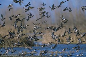 Federal grand jury indicts five Illinois men on charges of illegal waterfowl hunting in Fulton County