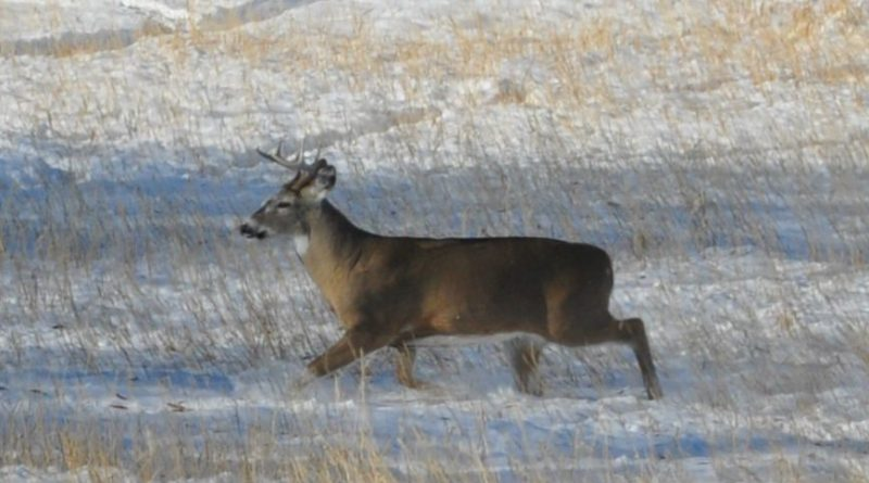 Michigan Lawmakers Make Move to End Ann Arbor's Deer Sterilization Efforts