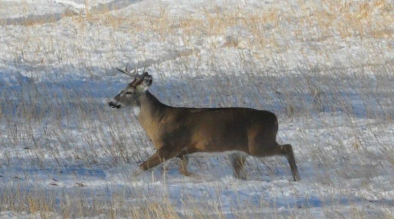 Michigan Lawmakers Make Move to End Ann Arbor's Deer Sterilization Efforts