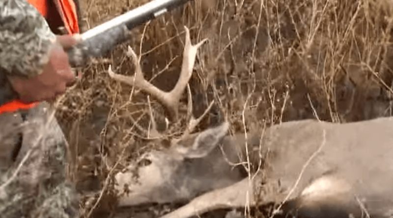 This Buck Isn't Going Down without a Fight