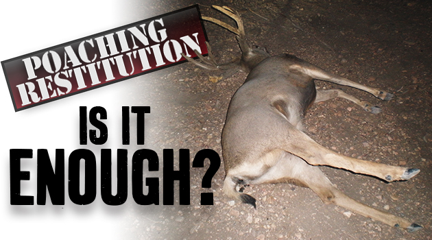 Poaching Restitution: Is It Enough?