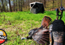 Can You Kill a Big Tom if You Set Your Blind Up the Same Day?
