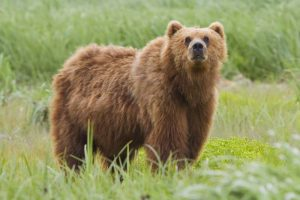Attacked From Behind, Woman Fights Off Bear
